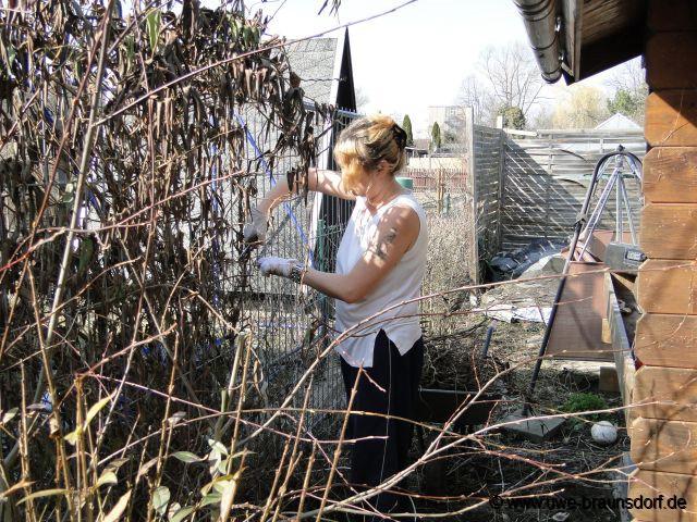 Gartentagebuch m rz 2012 - Gartenhaus kiwi ...
